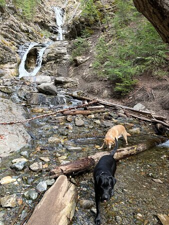 Lucky dogs taking a drink after much fun coming up the trail.