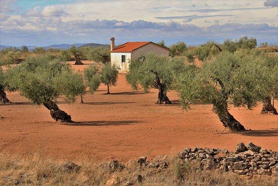 Spain: Il mio ultimo viaggio in Extremadura ed Andalusia, Ottobre 2020.  Mi último viaje a Extremadura y Andalucía, Octubre de 2020