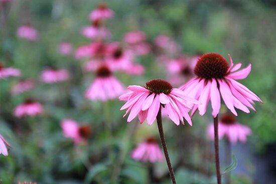 Heugas, França: Photo macro de plantes