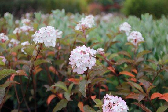 Heugas, França: Buisson fleuries