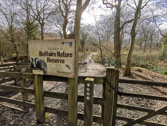 Saturday 06th March 2021 Belfairs Park Wood & Nature Reserve Walk.