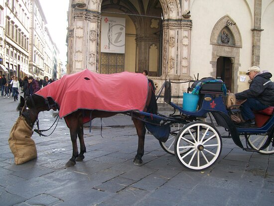 Budget Small-Group Tour of Florence main attractions with local licensed Guide: local transport )