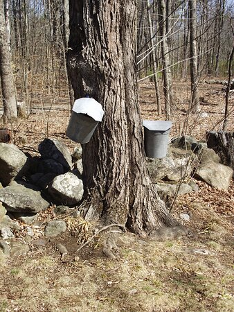 ME - MAPLE MOON FARM - OLD-FASHIONED SYRUP BUCKET SYSTEM