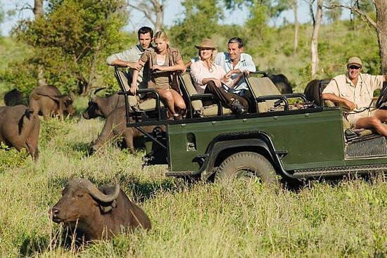 Murchison Falls National Park, Uganda: Every summer holiday, wildlife enthusiasts & holiday travelers who visit Uganda are assured of an experience of very close encounters with most of the fascinating wildlife animal species like buffalos & others of the big five (5) crew #VisitUganda  #SnoweaSafaris #Archives2019