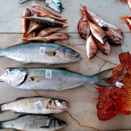 Alacati, Turkey: Balık mezatı ALAÇATI