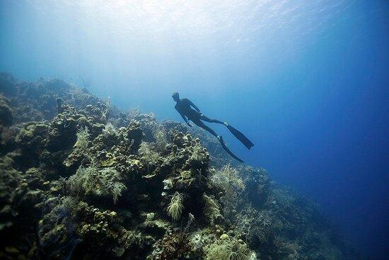 Freedive Mallorca