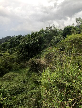 10 Day Western Uganda Wildlife Safari: Rainforest 