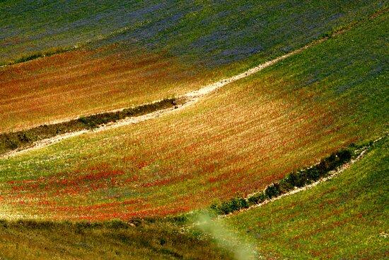 Castelluccio di Norcia, Italy: pennellate di fiori