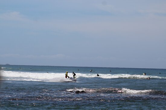 Whale Watching: Surfers