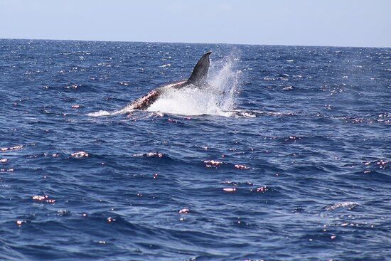 Whale Watching: Whale tail