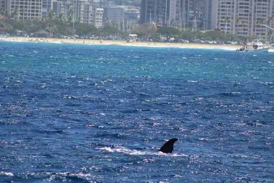 Whale Watching: Waving at everyone