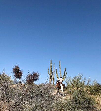 Outstanding desert horseback riding experience!
