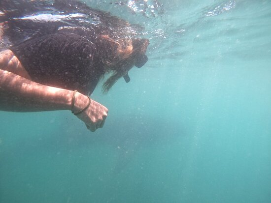 Whale Shark Swim Adventure in La Paz صورة فوتوغرافية
