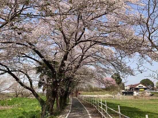Keno Fureaingu Road