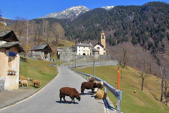 Valle Maggia, 31 Marzo 2021.