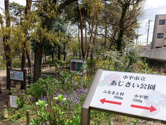 Ajisai Park