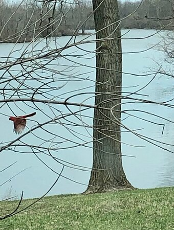 I caught this cardinal mid flight.  It's our state bird too!