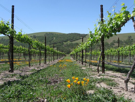 Creston, CA: Shadow Run vineyard in Spring