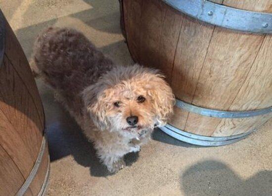 Creston, CA: Shadow Run is dog friendly!