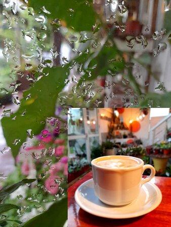 San Lorenzo, الأرجنتين: dias de lluvia en arboredo