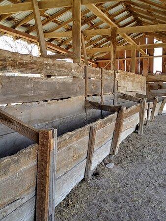 Cattle feeding troughs