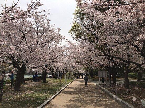 広島平和記念公園です。