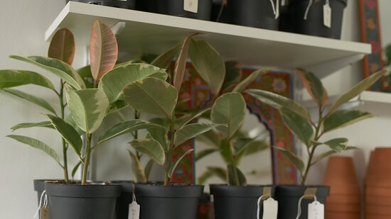 Please be advised The Planet is a house plant shop, and no longer serves food.