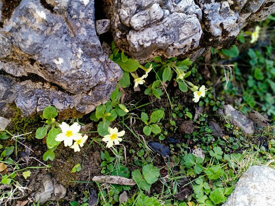 Half Day Rif valley Excursion from Chefchaouen: little flowers along the trail