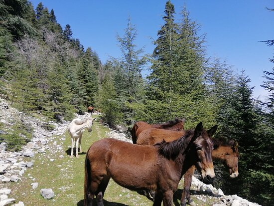 Half Day Rif valley Excursion from Chefchaouen: A pack of mules who decided they'd do the hike with us