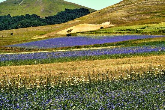 Castelluccio di Norcia, Italy: laghetti di fiori