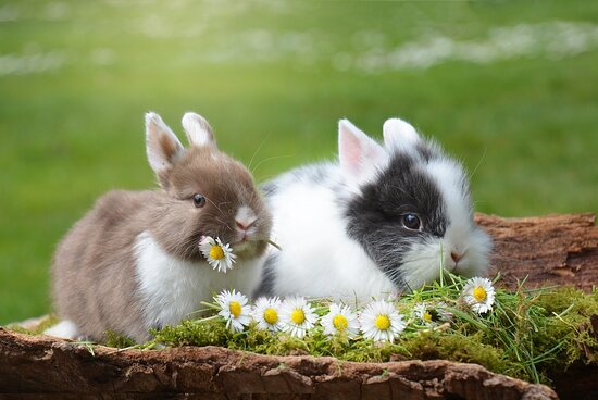 Liebe Freunde von Rössle in Waldenweiler, im Moment können wir Ihnen leider noch kein Wiedereröffnungsdatum sagen...es heißt weiterhin Geduld und Zuversicht zu haben. Wir wünschen Ihnen frohe Ostern. Passen Sie auf sich auf und bleiben Sie gesund.  Das Wiedersehen wird um so schöner!