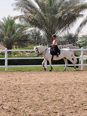 Best stables in Dubai