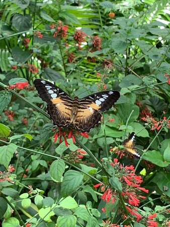 Butterfly Exhibit at the Florida Museum of Natural History