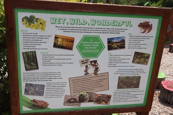 Wet, Wild,Wonderful