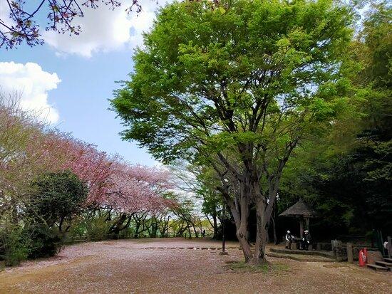 Minuma Tsusen-bori Park