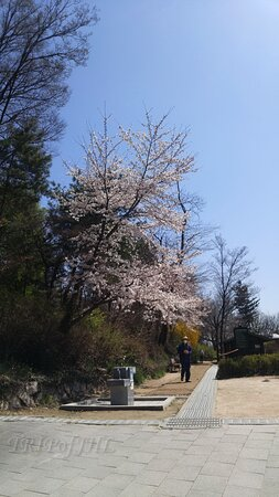 Namsan Park in late March