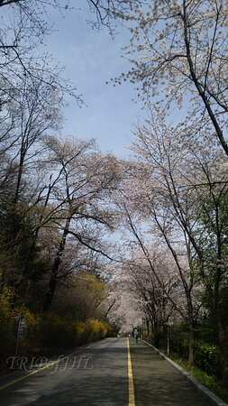 Namsan Park in early April