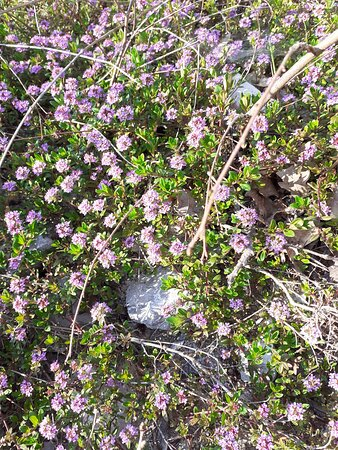 We have had warm and sunny days for a very long time. And our valley blossomed. This is a small part of our spring herbs.