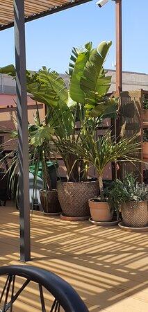 Ambientazo en su Terraza/Restaurante