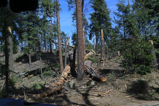 Example of tornado damage