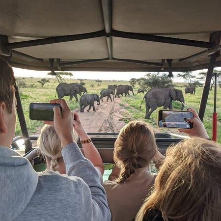 Serengeti National Park, Tanzania: Enjoy Game Drive with Dreamland Safaris in TanZania's National Parks
