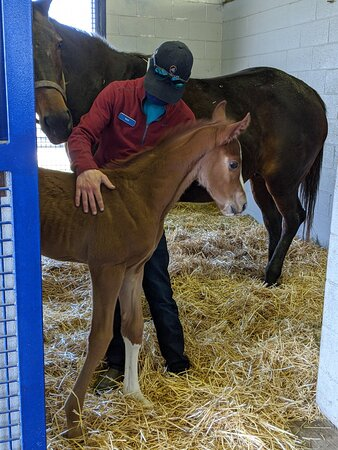 Enjoyed being close to many new foals!