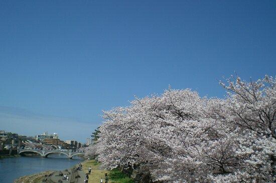 Kanazawa, Japan: 浅野川の桜満開