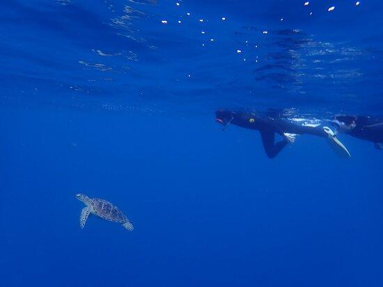 カメと一緒に泳いだよ