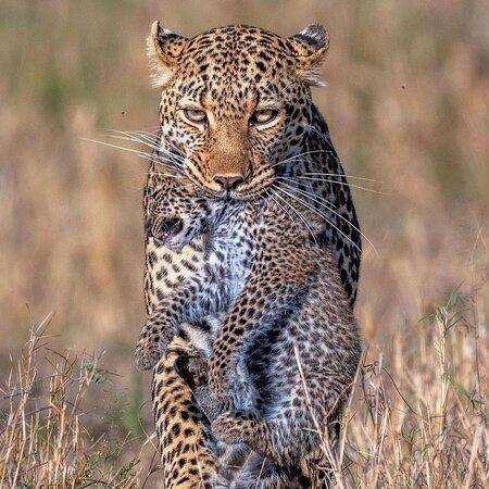 Serengeti National Park, Tanzania: Lovely mother  Leopard's territory