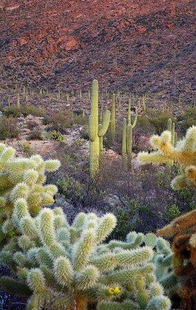 Arizona 45