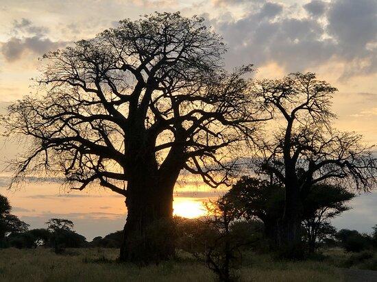 Tanzania: Tarangire at sunrise