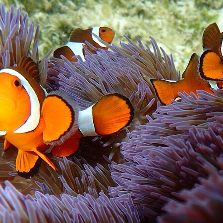 Fam Island, Indonesien: Meos Ambower homestay raja ampat