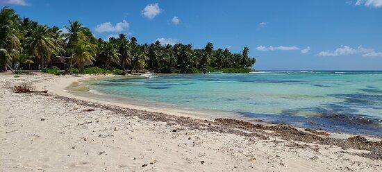 Beach at Isla Saona