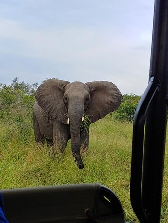 Elephant on the game drive